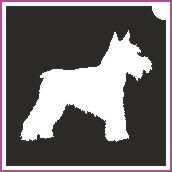 Kutya (csss0063)