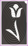 Tulipán (csss0125)