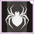 Fekete özvegy pók (csss0203)