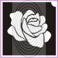Rózsa (csss0210)
