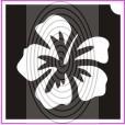Orchidea (csss0242)