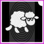 Bárányka (csss0445)