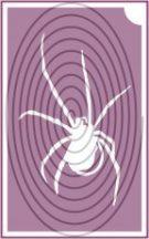Pók (csss0529)