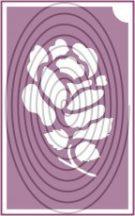 Rózsa (csss0533)