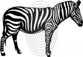 Zebra - falmatrica