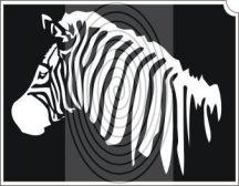 Zebra (css_orias_0004)