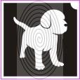 Kutya beagle (csss0201)