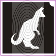 Kenguru (csss0267)