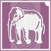 Elefánt 2 (csss0524)