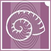Csigaház (csss0527)